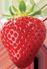 Fraises / Petits fruits